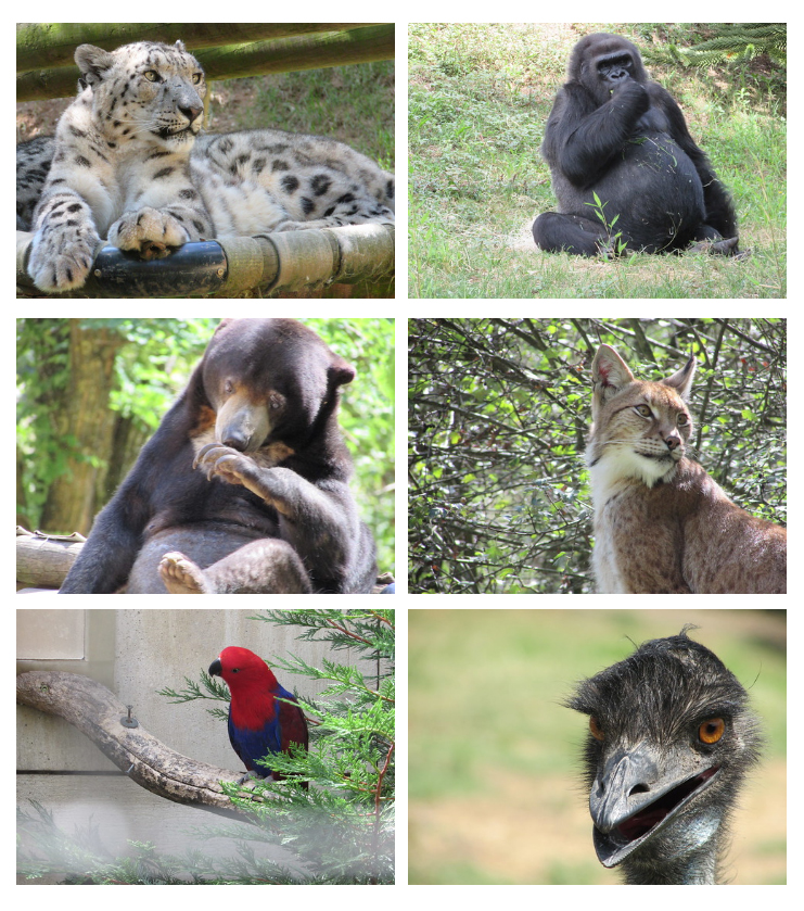montage_zoo
