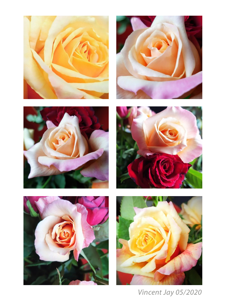 montage_roses_mai